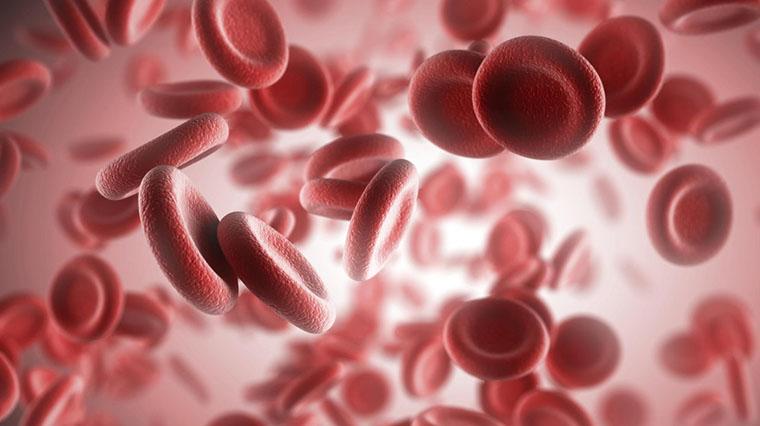 Globules sanguins